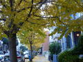 A Little Taste of Autumn in San Francisco